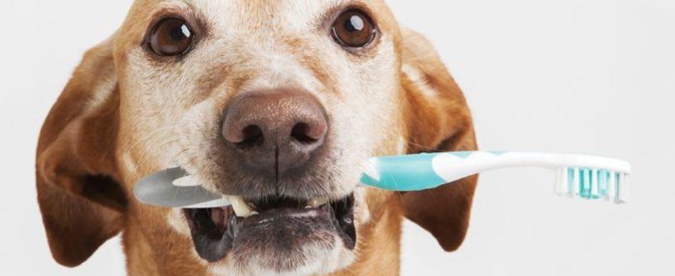 comment nettoyer les dents de son chien?